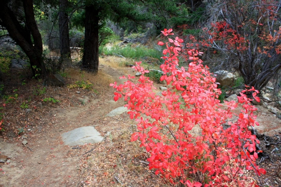 fall-poison-oak-yb-1