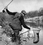 Santa Ynez River steelhead 1942 YB
