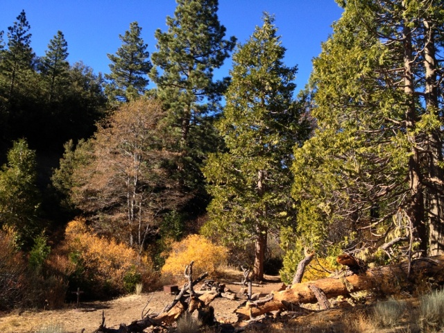 Pine Mountain 15