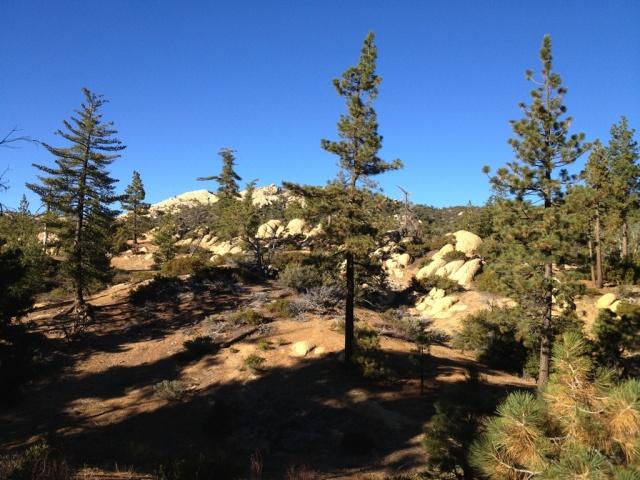 Pine Mountain 16 (2)