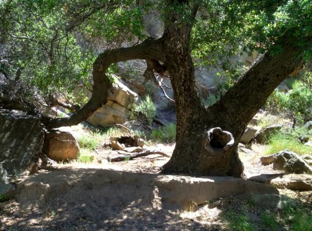 Mono Creek Narrows Camp (2)