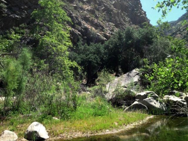 Mono Creek Narrows Camp