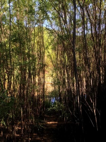 Mono Creek Trail