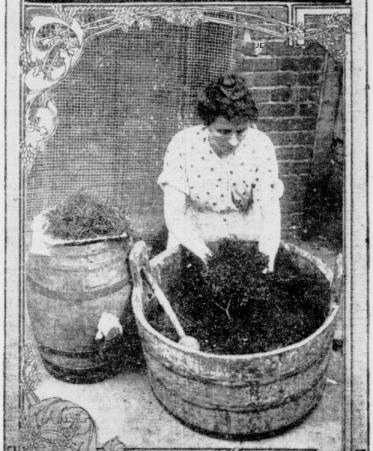 elderberry wine making