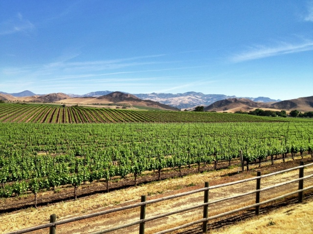 Santa Ynez Valley viticulture winemaking