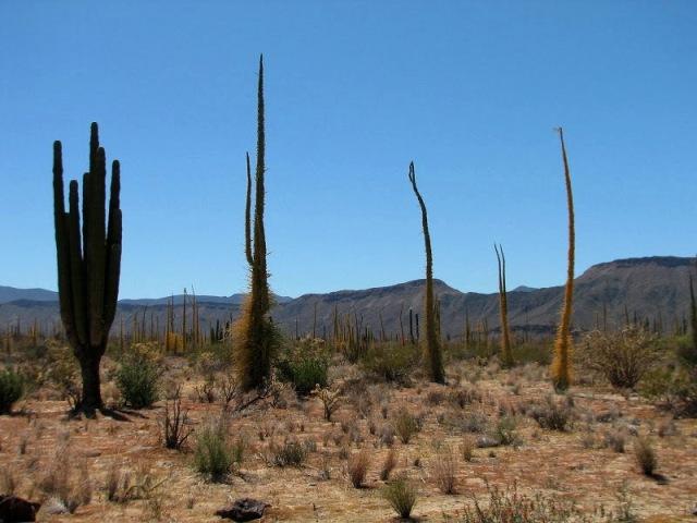 Sonoran Desert Mexico