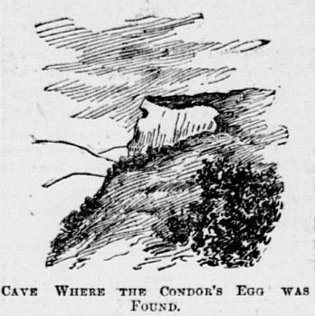 California condor nest cave National tribune November 14, 1895