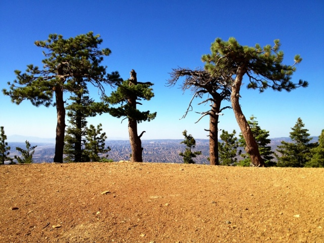 Pine Mountain trees cuyama badlands