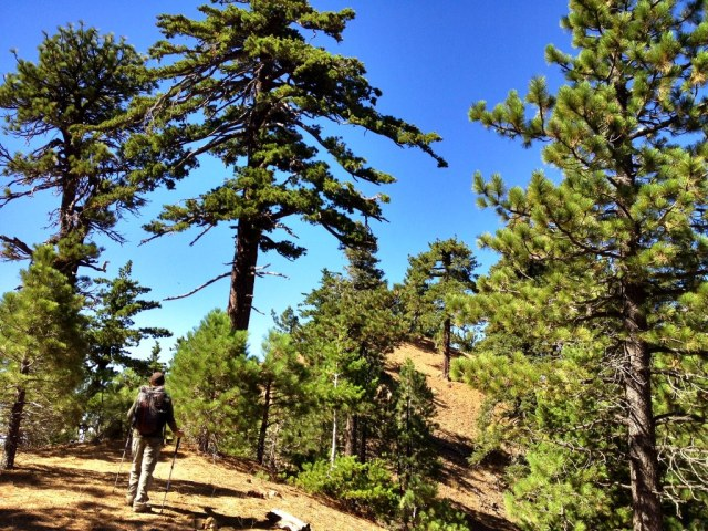 Reyes Peak Trail Haddock Mountain