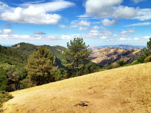 Figueroa Mountain summer hiking