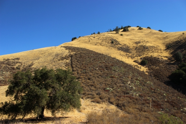 Grass Mountain Zaca Ridge