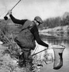 santa-ynez-river-steelhead-1942