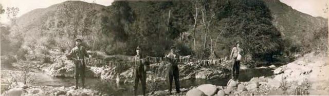 Stringer_of_Steelhead_Trout_Upper_Sisquoc_River_1916