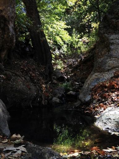 Alamo Pintado Creek Birabent Canyon