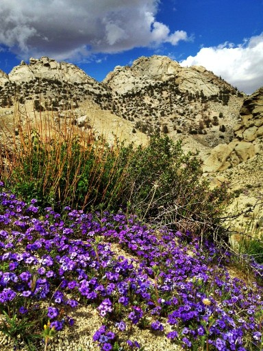 Indian Wells Canyon wildflowers and peaks