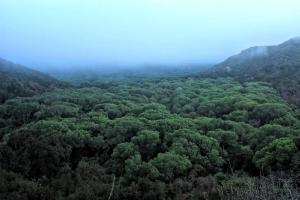 Mono Jungle