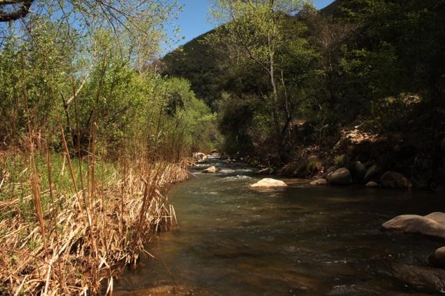 Santa Ynez River tributary