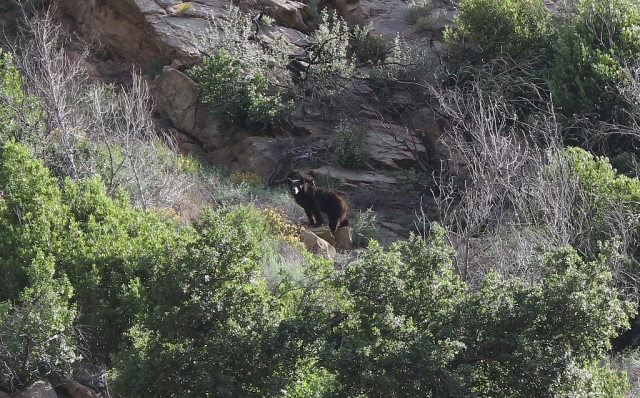 black bear Santa Barbara hiking