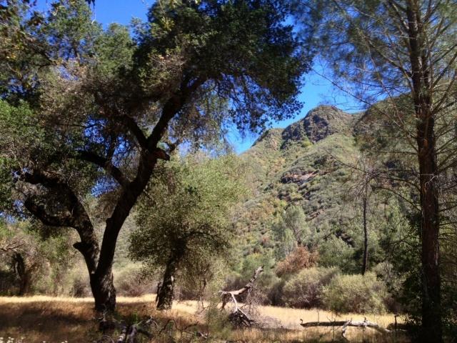 Manzana Creek Trail Eddy Fields oak tree initials