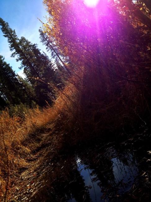 Sespe Wilderness Cedar Creek Trail