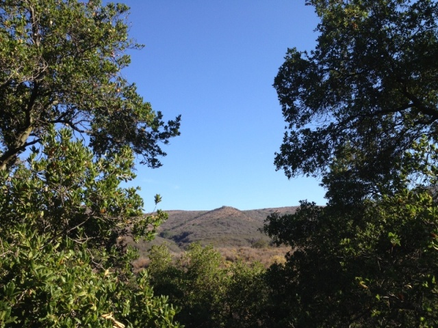 Oak Woodland Chaparral