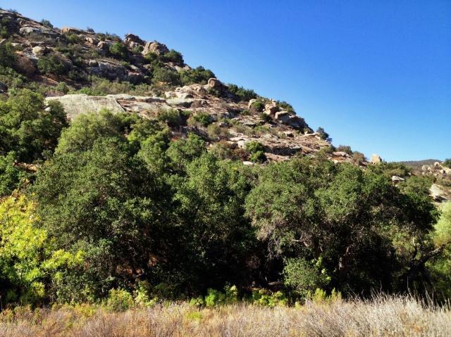 Riparian habitat near Chumash Rock Art Site