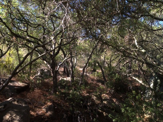 California oak forest Chumash mortars midden site