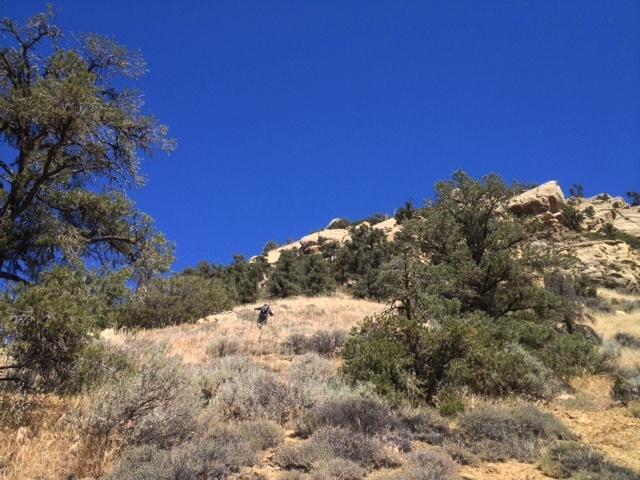 Eagle Rest Peak San Emigdio hikes