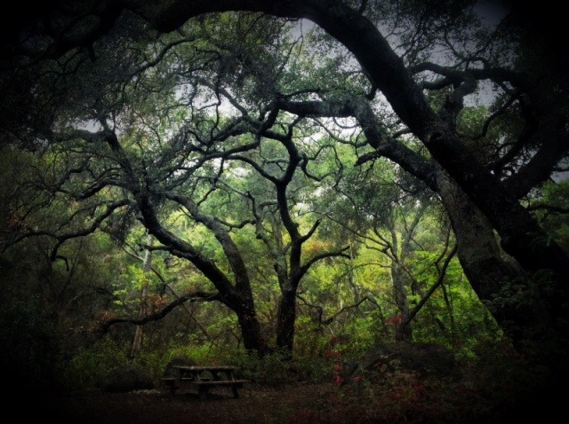 Santa Barbara Hikes San Roque Jesusita Trail Stevens