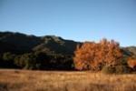 Cottam Camp Los Padres Santa Barbara hikes Santa Ynez