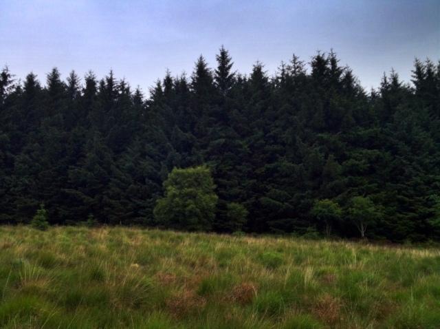 Isle Arran Scotland hiking forest