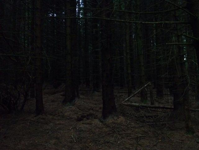 Stronach Wood Arran Scotland hiking hill walking