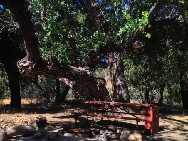 Coldwater Camp San Rafael Wildernes Santa Barbara hikes