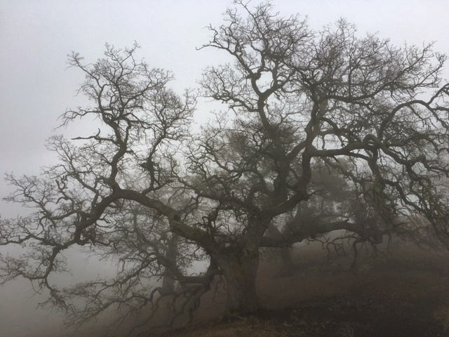 Figueroa Mountain hike oak fog