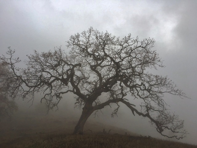 Figueroa Mountain hiking OakTree Fog