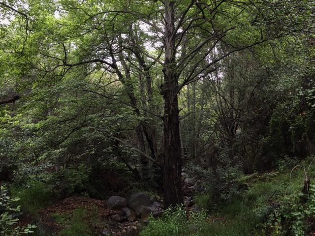 Arroyo Burro Trail San Antonio Creeks Santa Barbara