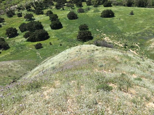 Sage Hill Los Padres Santa Ynez River Santa Barbara hike