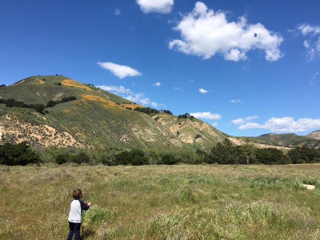 Sage Hill wildflowers Santa Ynez Los Padres