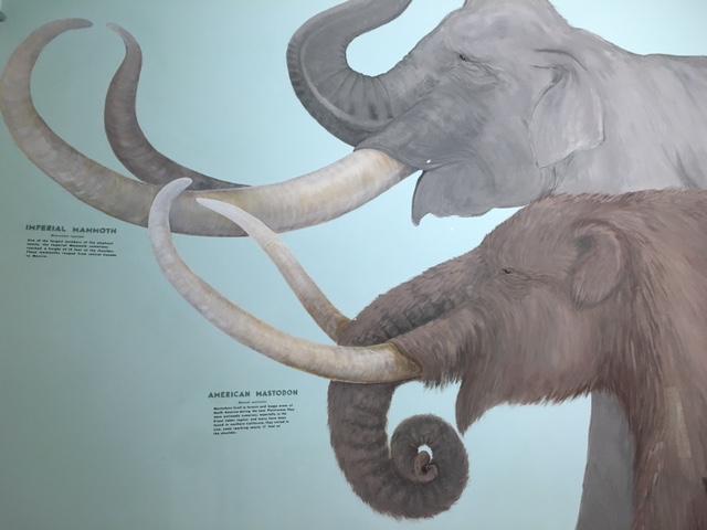 santa barbara mammoth mastodon natural history museum