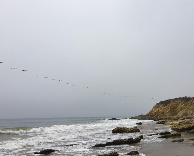 gaviota-coast-hikes-pelicans-surf
